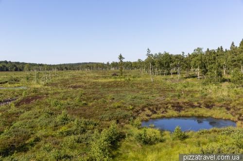 Mechlenbruch swamp (Hochmoor Mecklenbruch)