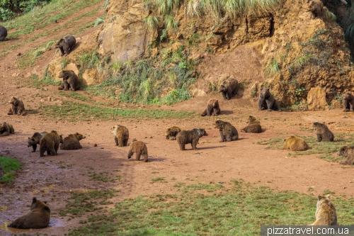 Сафари в парке Кабарсено (Parque de la Naturaleza de Cabarceno)