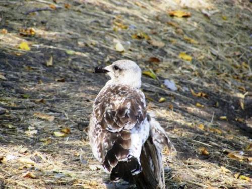 Птица со сломанным крылом