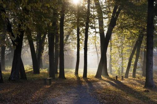 Усадьба окружена парком, в котором более 300 видов деревьев и кустарников.