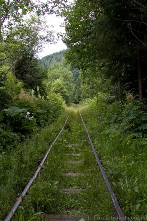 Carpathian Tram: road in the forest