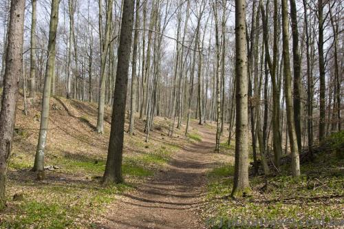 Ecotrail in the Natur Live park in the Harz Mountains