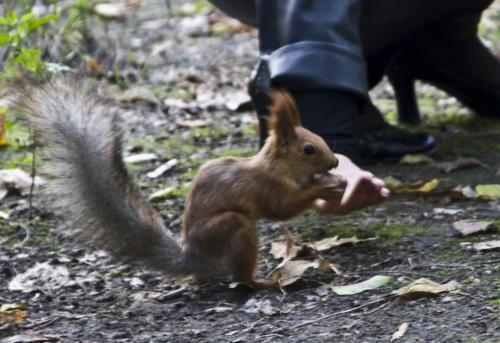 Hungry squirrel in the Shevchenko Park