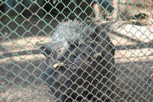 Зоопарк на Монастирському острові