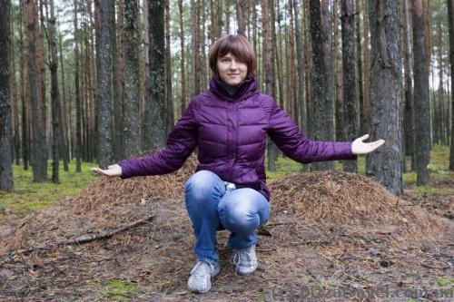 В лесу много больших муравейников