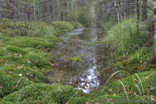 Искусственные каналы в лесу, образовавшиеся после прокладки грунтовой дороги.