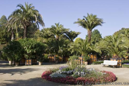 Пальмовый сад в Курортном парке
