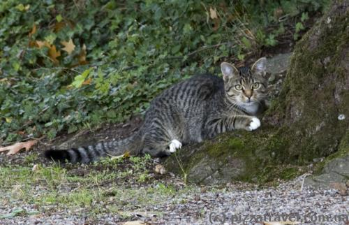 Cat near the Haemelschenburg Castle