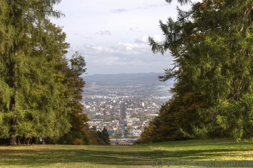 Вид на алею Вільгельмсхее