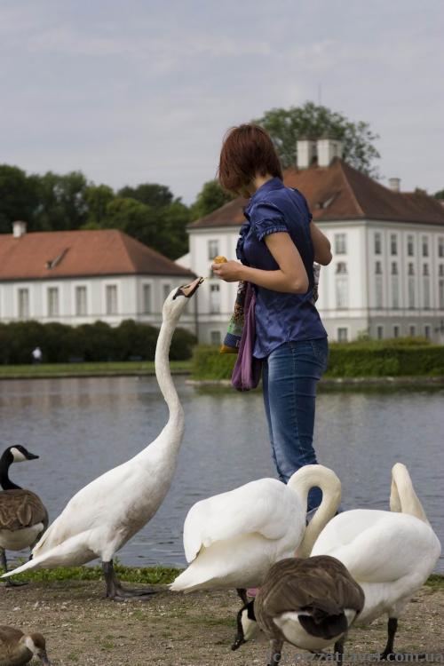 Лебеди около дворца Нимфенбург