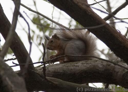 Syrets Arboretum is full of squirrels.