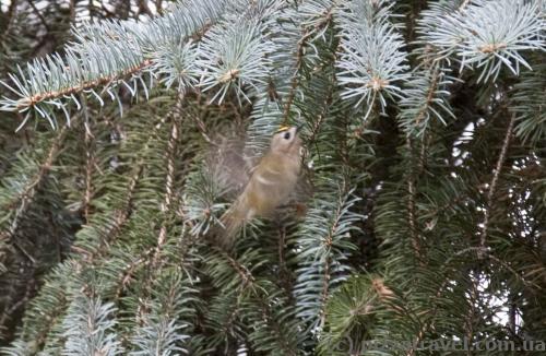 Unusual little bird in the Syrets Arboretum