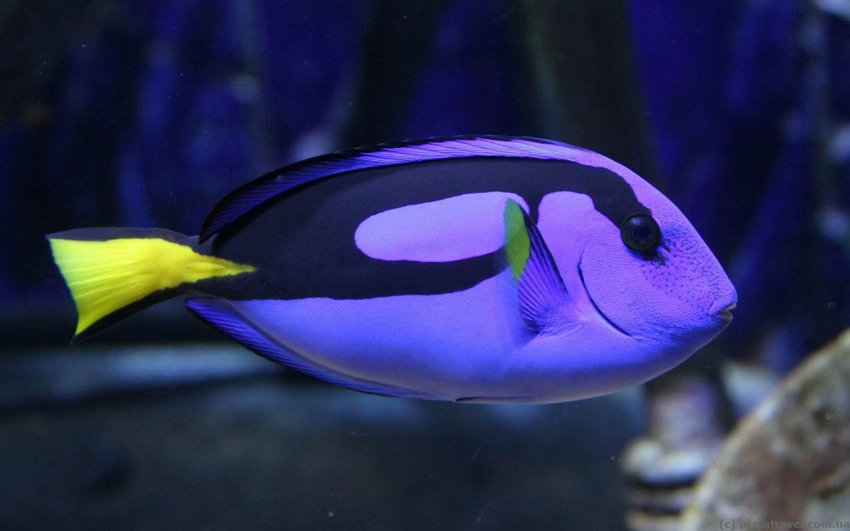 Fish aquarium in umm al quwain - The Lost Chambers Aquarium