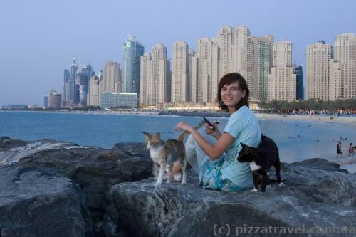 Cats on the pier in Dubai Marina