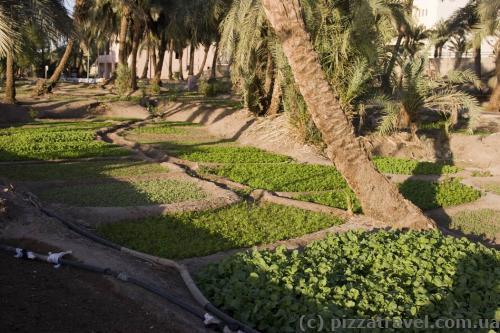 Своеобразные газоны в Акабе