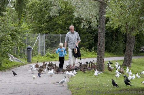 Парк около замка Фредериксборг