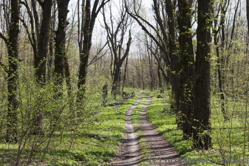 Ecotrail in the Mezyn National Nature Park