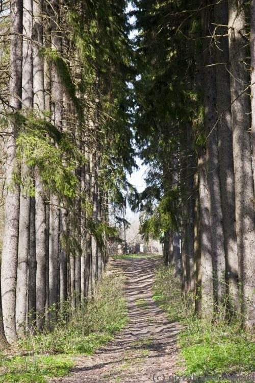 Ялинова алея