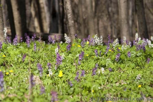 There's a lot of spring flowers in the forest.