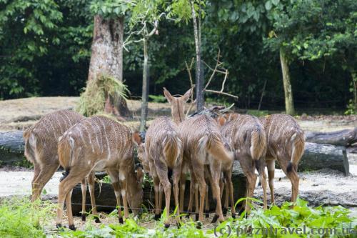 Зоопарк Сингапура