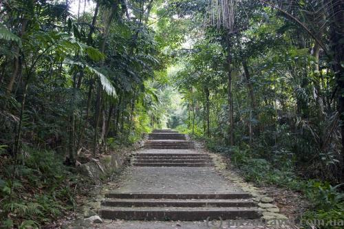 Path to Mount Faber (Marang Trail)