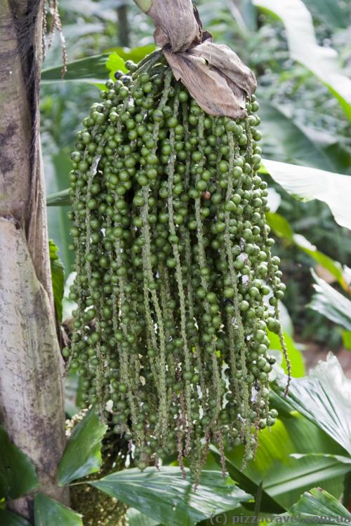 Незвичайна рослина