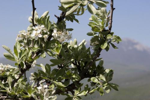 Весна в Демерджи