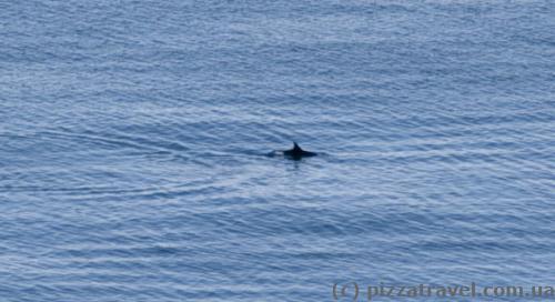 На море то тут, то там видны дельфины